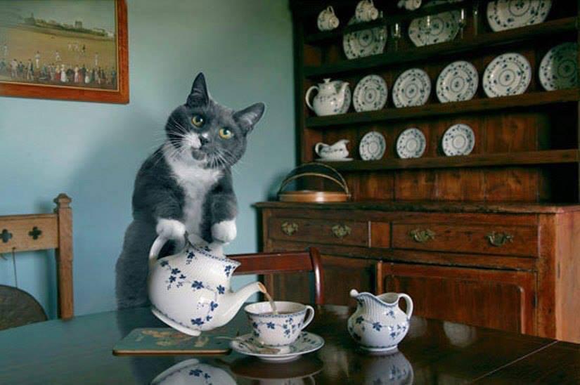 Кошка пьет чай