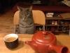 Фото: Кошка сидит за столом перед чашкой с чаем.