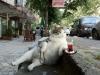 Фото: Кот пьет чай на улице.