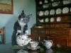 Фото: Кошка наливает чай.