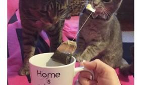 Фото: Дом — там где кот, а чай — там где заварка… а не опилки в пакетиках.