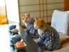 Фото: Кот и чайная церемония.